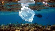Diese vier Projekte wollen die Weltmeere von Plastikmüll befreien