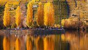 Warum der Herbst in Stuttgart am schönsten ist