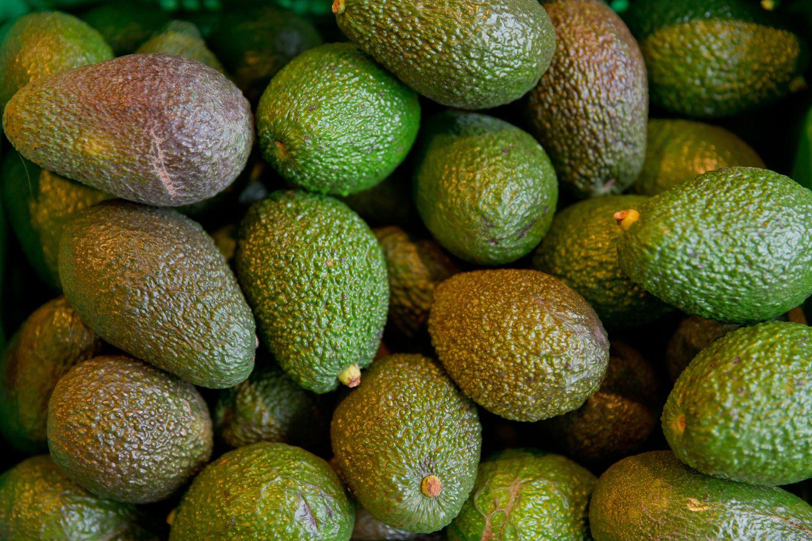 Avocado Dpa