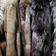 Sieg für den Tierschutz: Bis 2019 müssen alle Pelzfarmen in Tschechien schließen