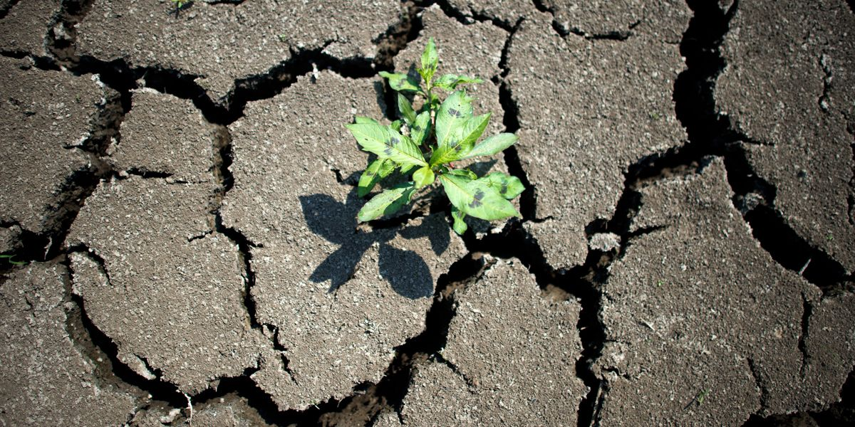 Klimawandel Dpa