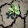 15.000 Wissenschaftler haben zusammen die größte Warnung zum Klimawandel verfasst