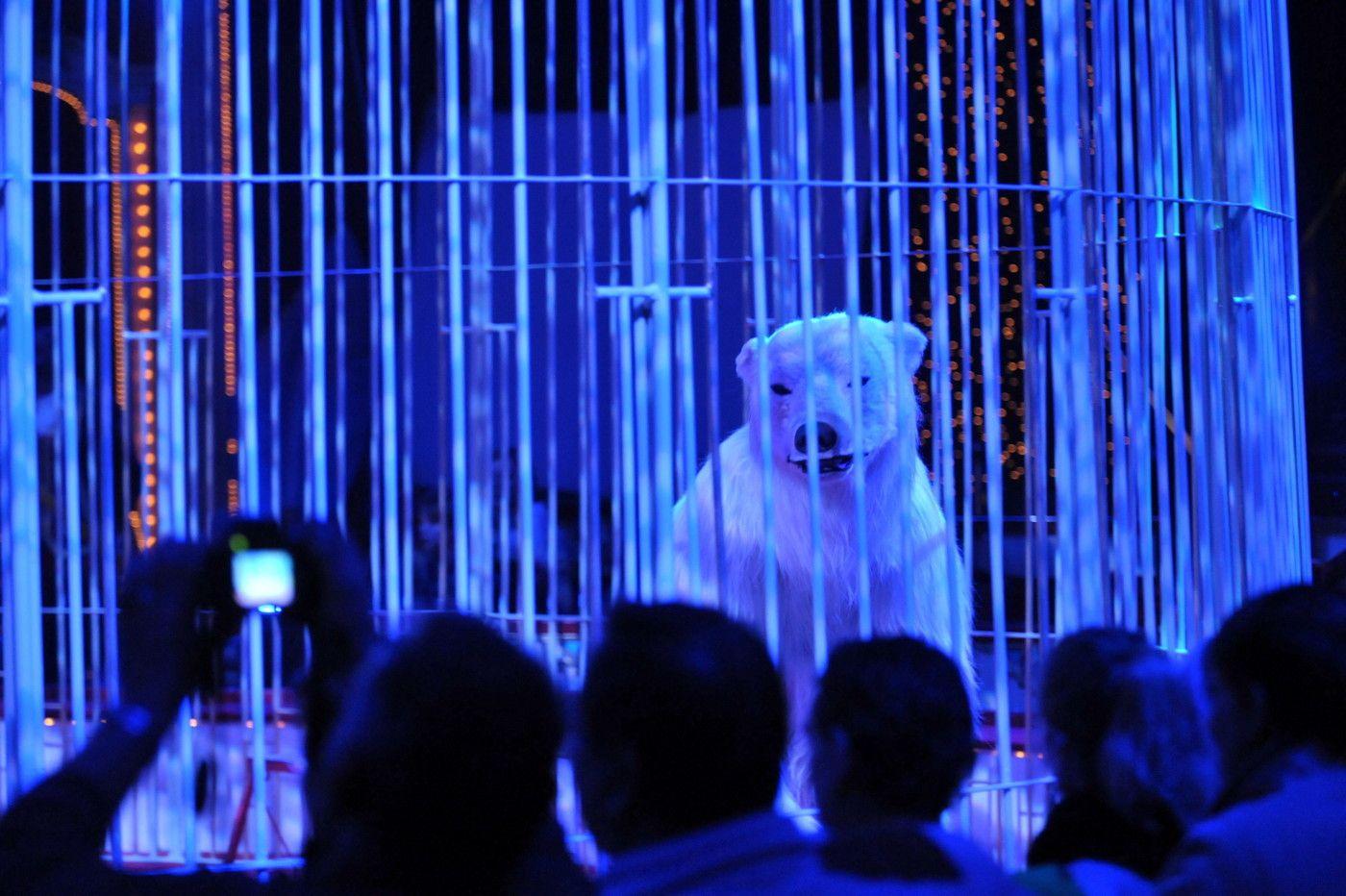 Eisbaer Roncalli Zirkus Tier