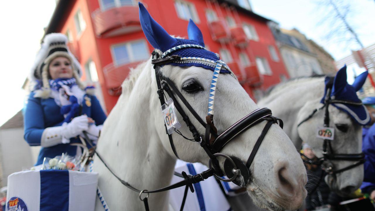 Köln Pferde Gehen Durch