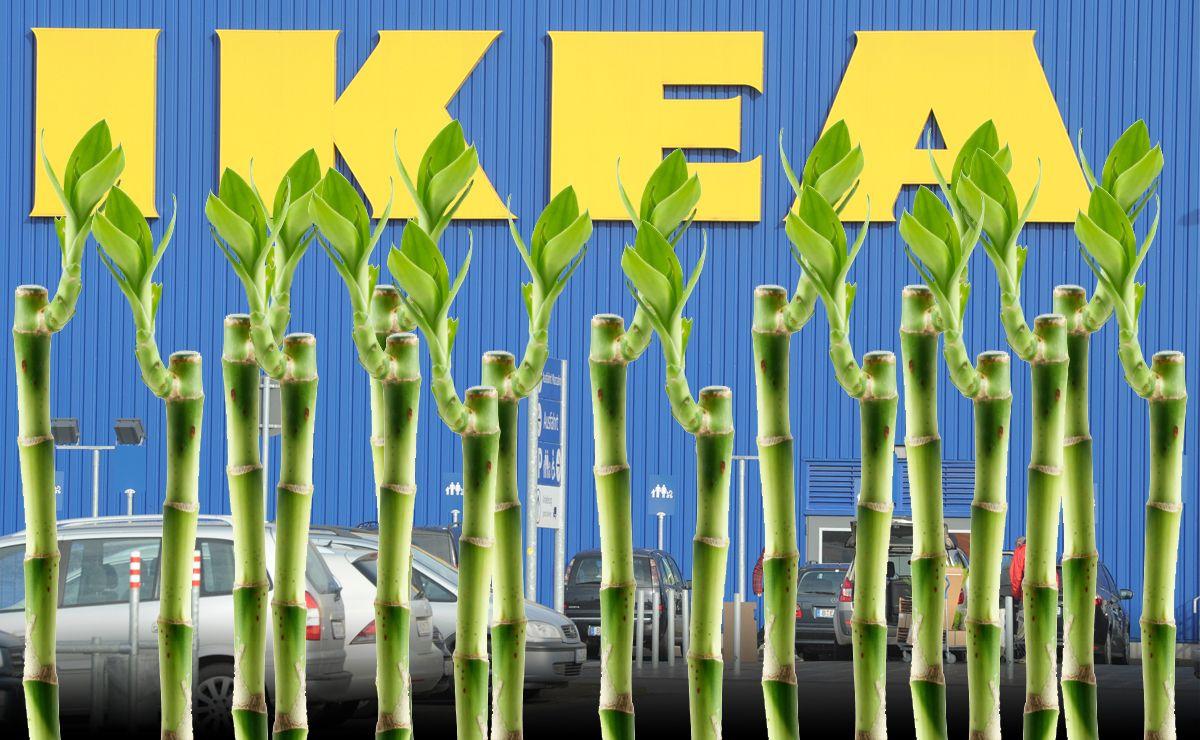 Ikea Bambusse Dpa