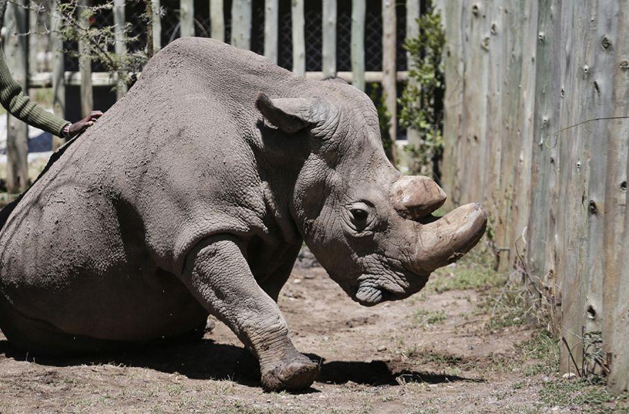 Nashorn Sudan Dpa