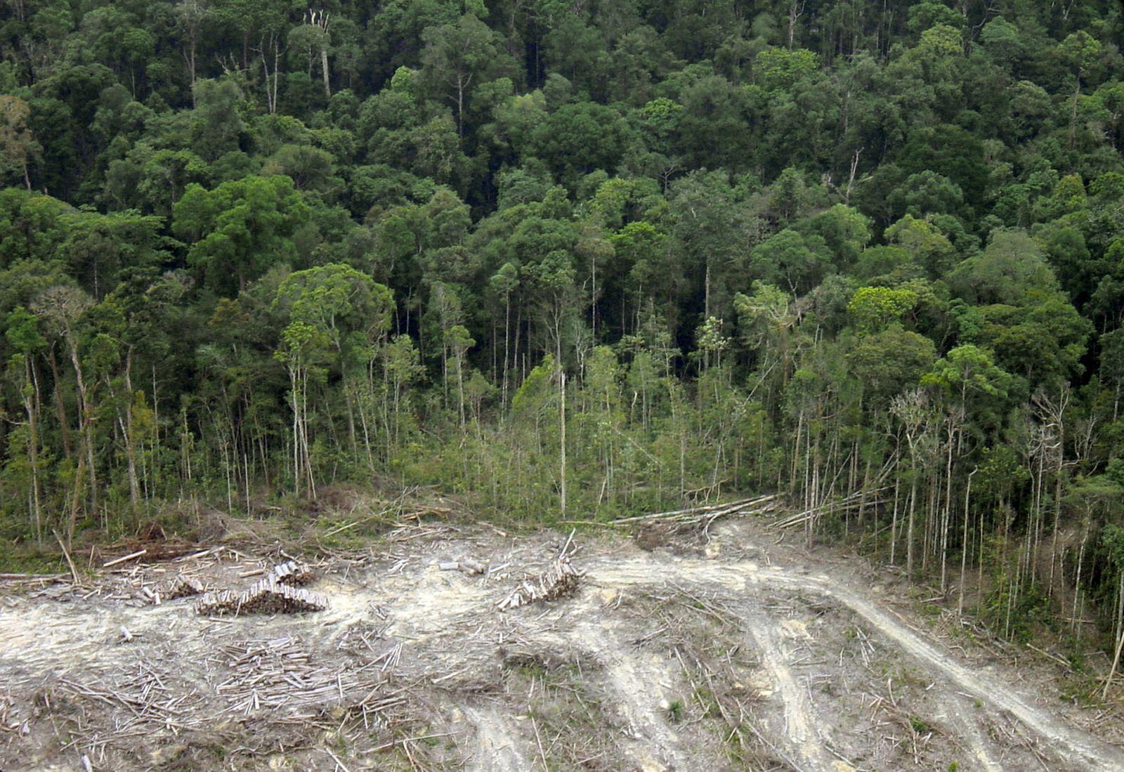 Regenwald Dpa