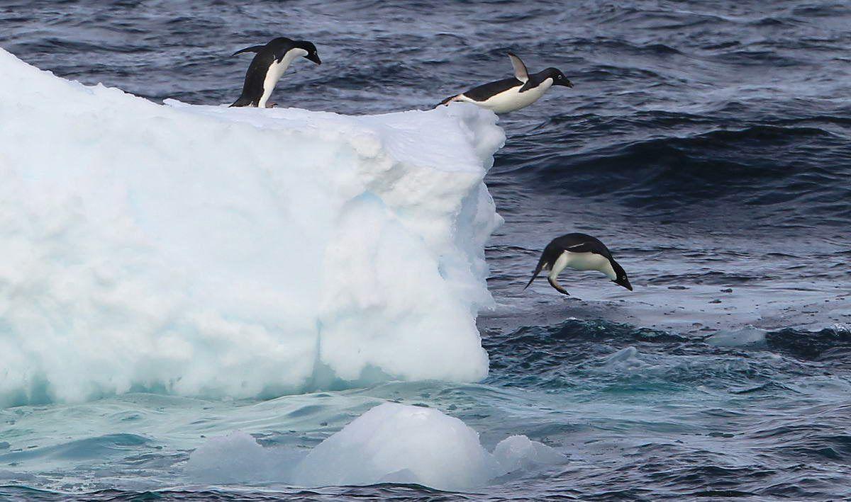 Antarktis Dpa