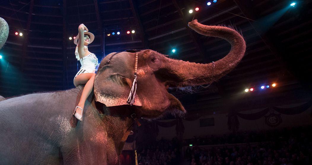 Zirkus Elefant