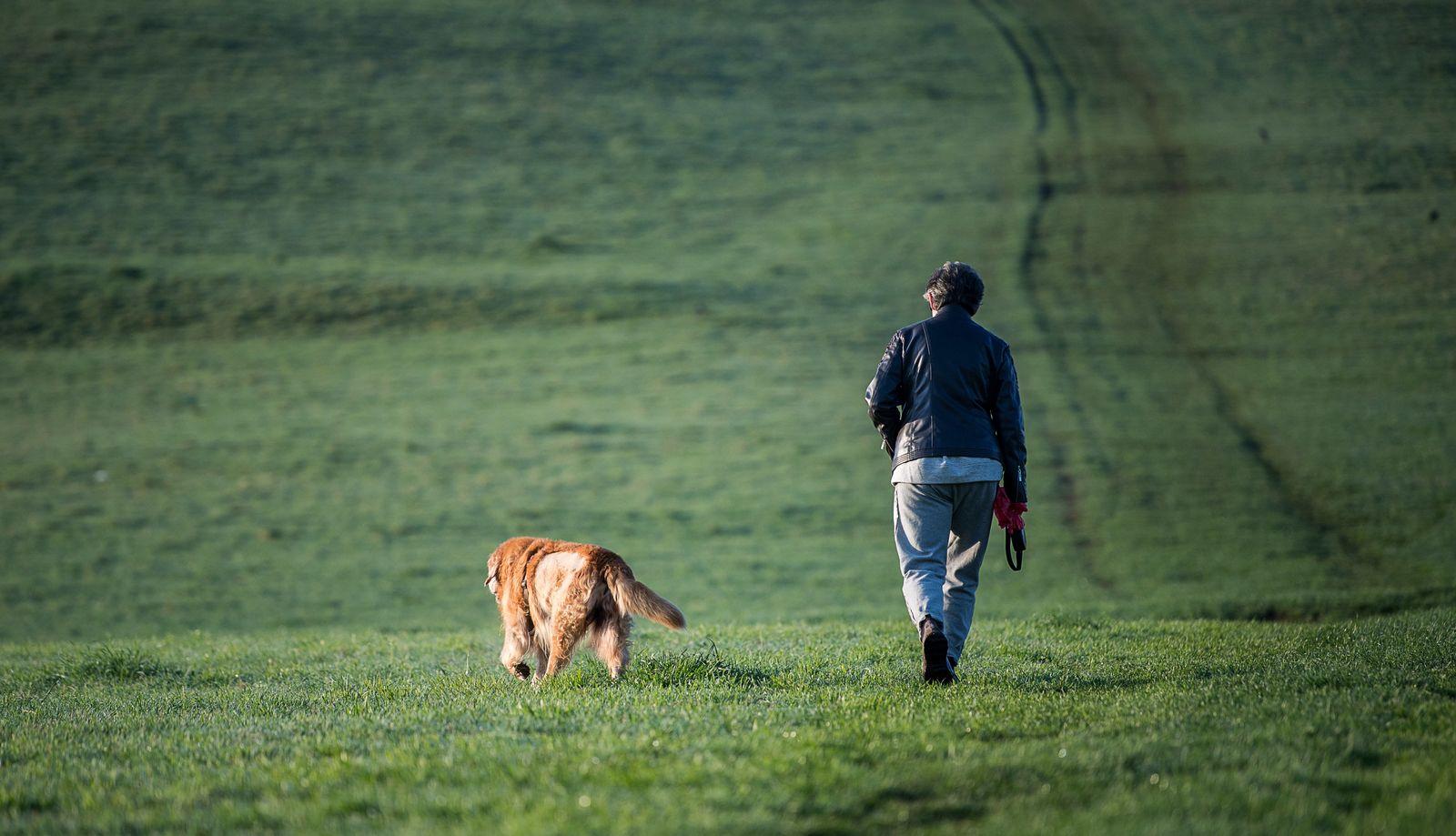 Morgenspaziergang mit Hund