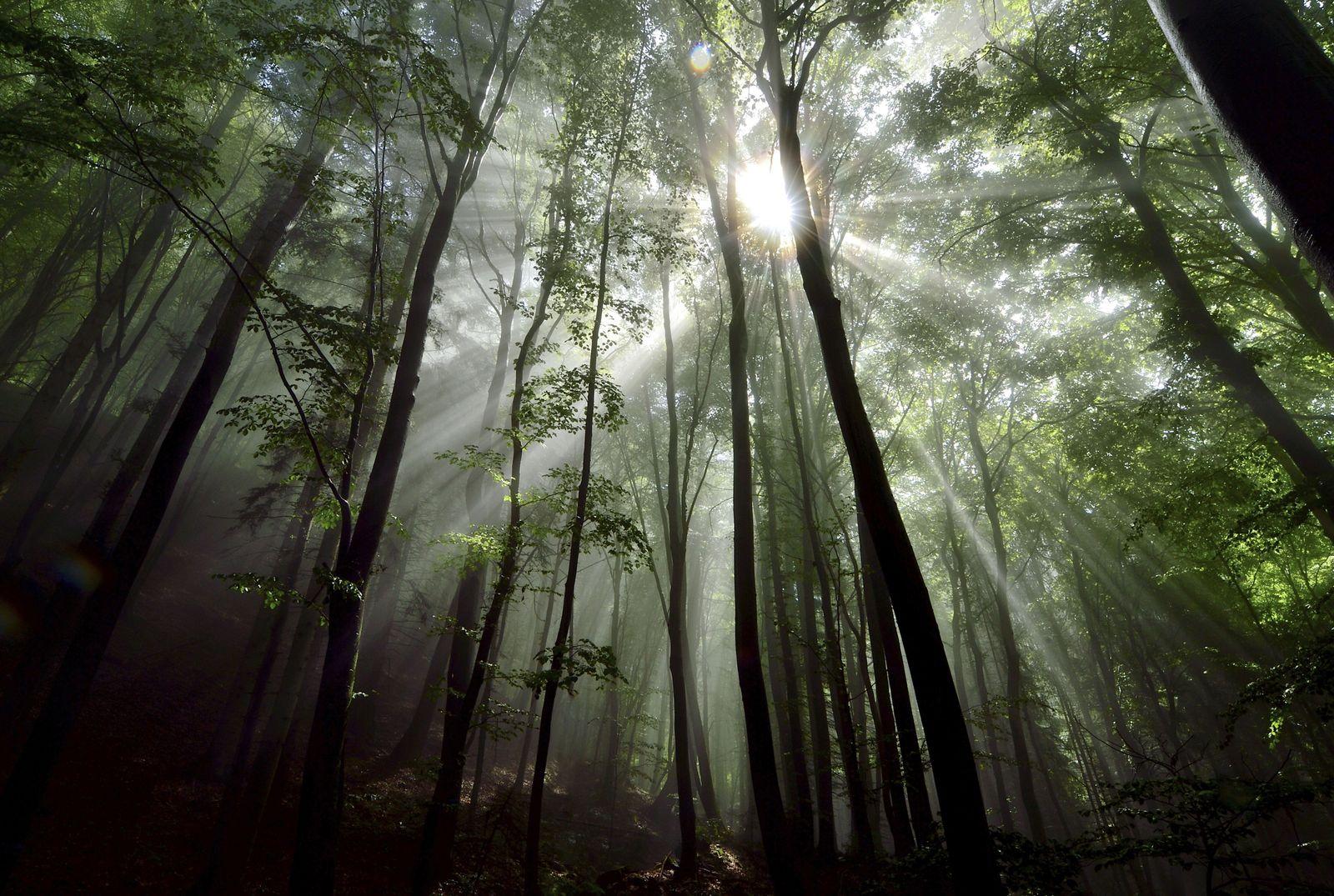EINMALIGE VERWENDUNG Wald