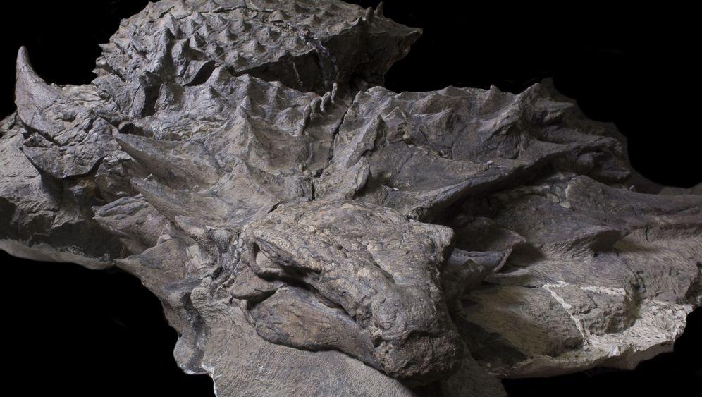 Nodosaurus: Panzer auf Beinen