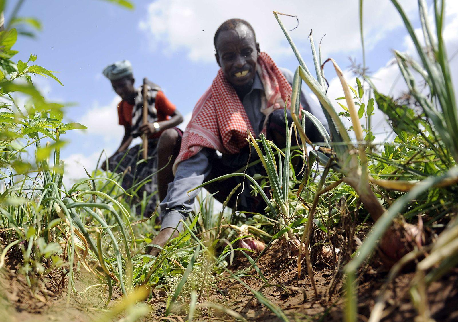 UN / Landwirtschaft / Somalia