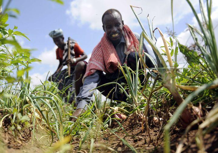 Landwirtschaft in Somalia: Extreme Armut nimmt ab