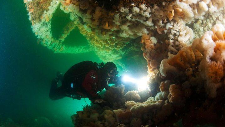 Nordsee: Das U-Boot-Wrack aus dem Ersten Weltkrieg
