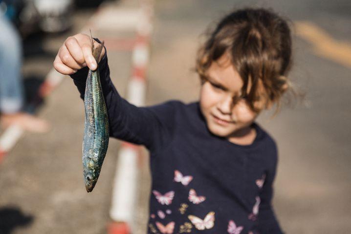 Weil die Sardinen zum Strand fliehen, lassen sie sich auch mit einfachen Mitteln fangen