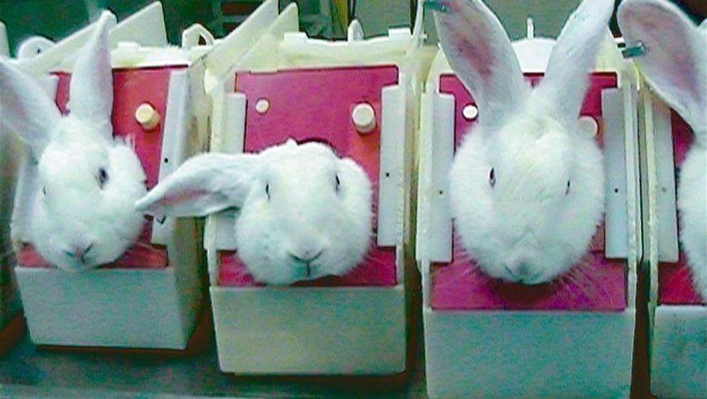 Tierversuche: Leiden für die Forschung