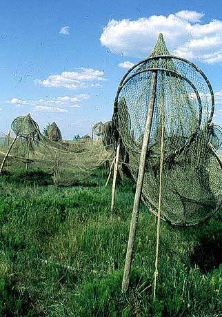 Reusen und Fischernetze trocknen im Wind.