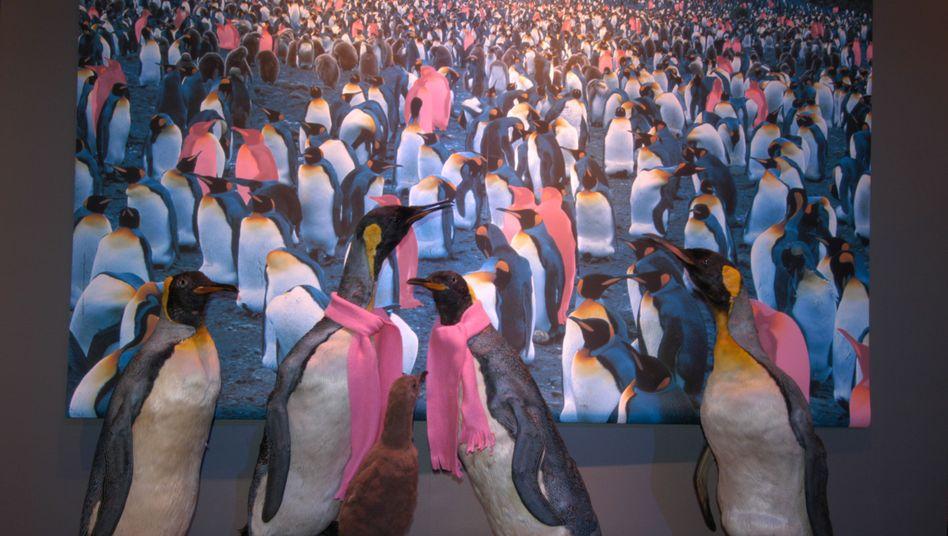 """Ausgestopfte Pinguine in der Ausstellung: """"Das ist nur die Spitze des Eisbergs."""""""