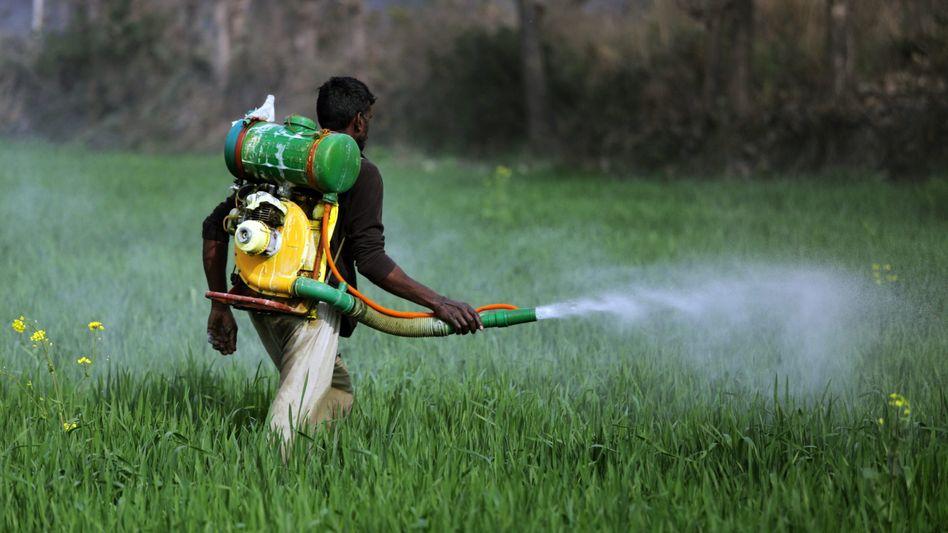 Pestizide: Ein Arbeiter in Indien besprüht ein Feld