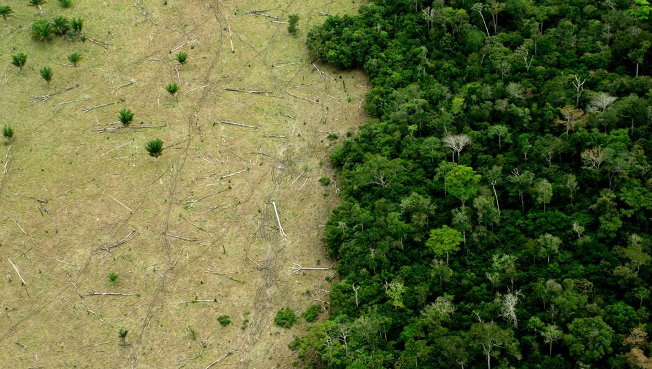 Amazonasregenwald: Brasilien besitzt den größten Regenwald der Welt - und damit viel Kapital, das es in die Waagschale des CO2-Handels werfen kann.