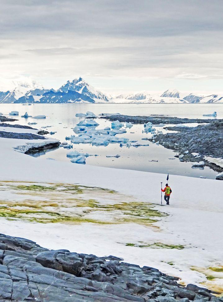 Forscher Andrew Gray kartiert ein Algenfeld auf der antarktischen Halbinsel