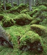 Moos: 400 Millionen Jahre alter Wachstumsfaktor