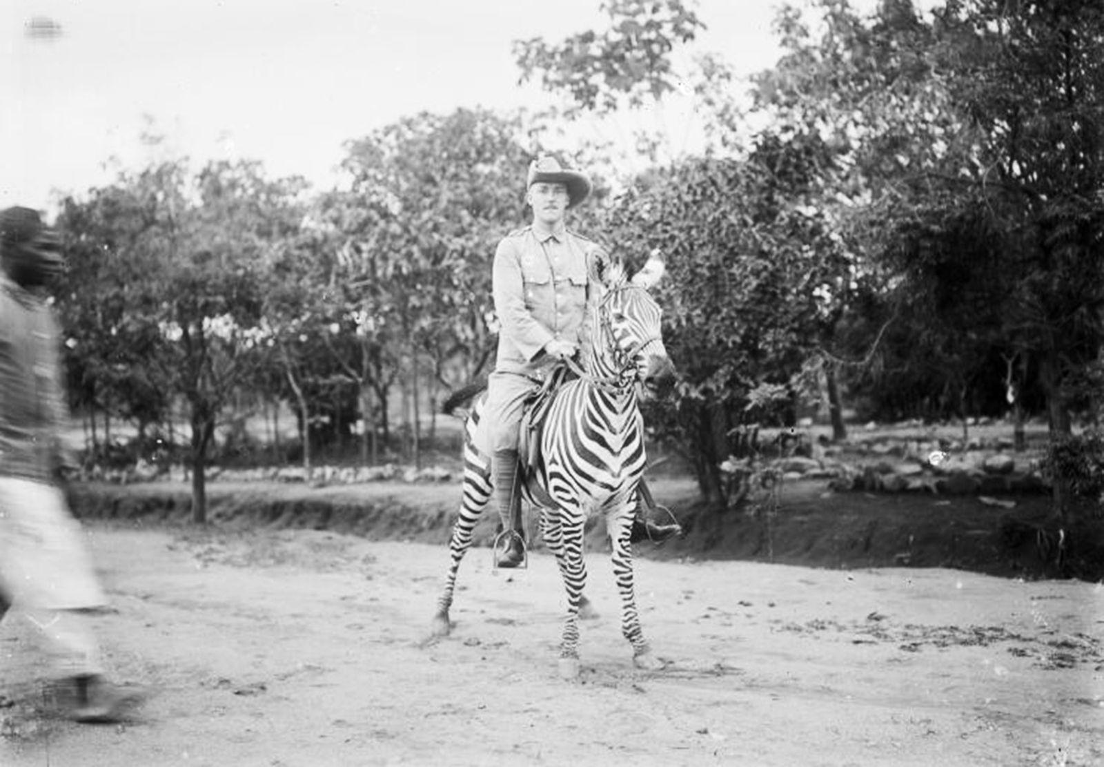 Zebra-Reiter