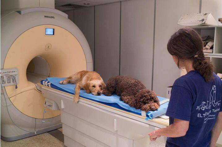 Testhunde im fMRT