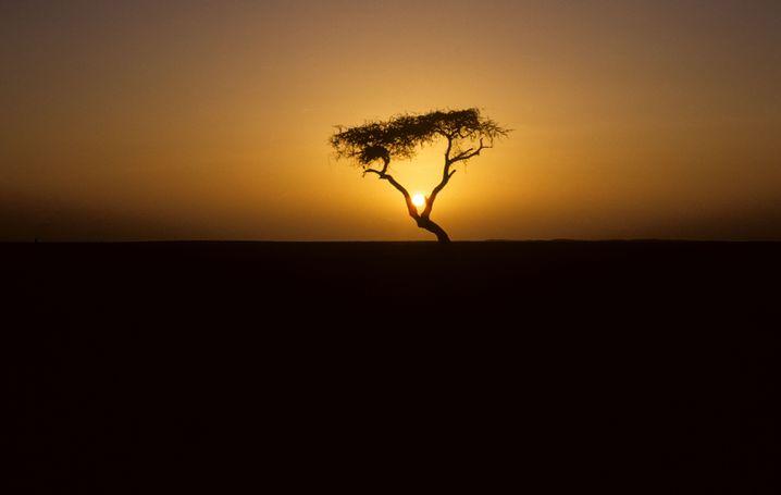 Bei Nacht, so erzählte man sich in Niger, soll der Stamm des Baumes oft rot geglüht haben