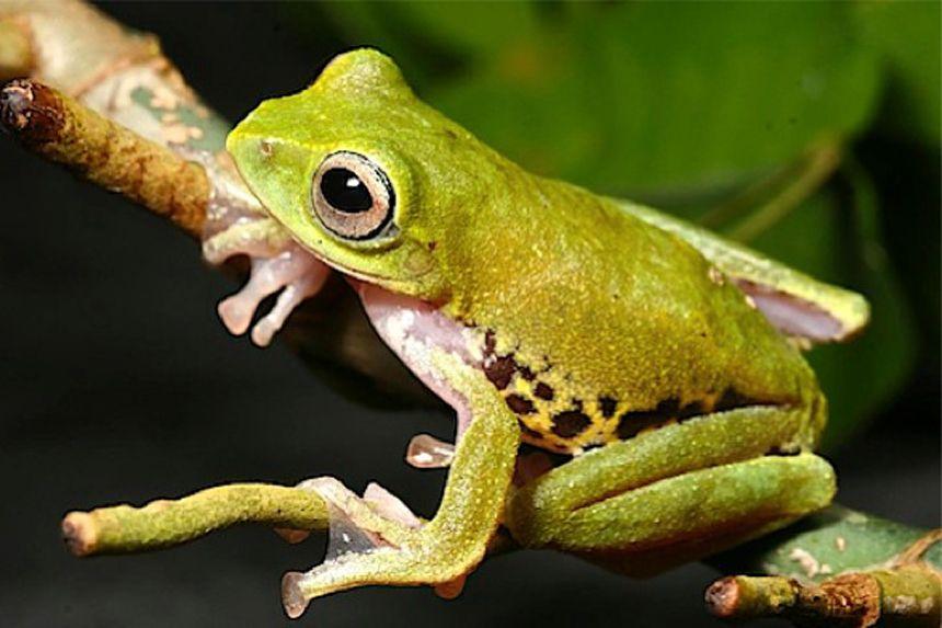 EINMALIGE VERWENDUNG WWF / Borneo / Neuentdeckung