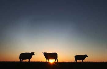 Schafe auf dem Deich: Ab Mittwoch soll Lothar viel Wind nach Norddeutschland bringen