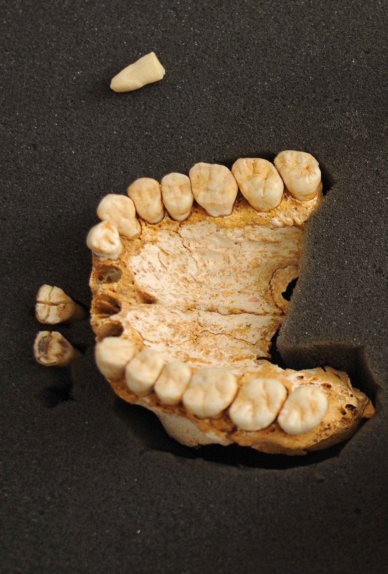 NICHT VERWENDEN EINMALIGE VERWENDUNG Neandertaler