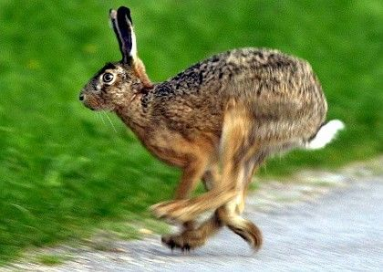 "An elderly Austrian couple have been attacked by a ""crazed hare."""