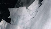 Die Antarktis wird ein großes Stück kleiner