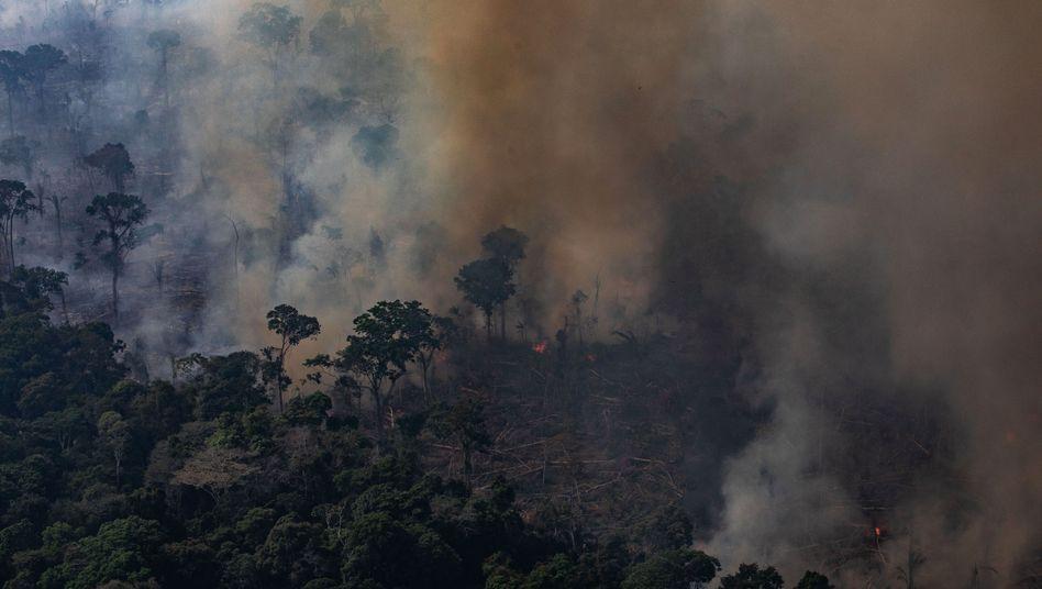 Brennender Amazonas-Regenwald: Verstörende Bilder