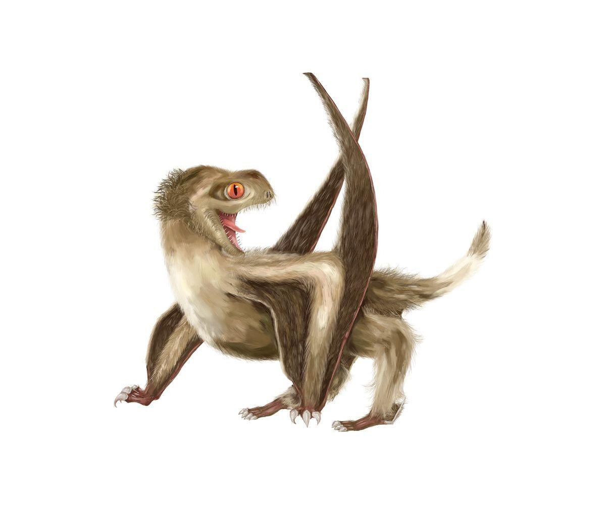 EINMALIGE VERWENDUNG Gefiederte Flugsaurier