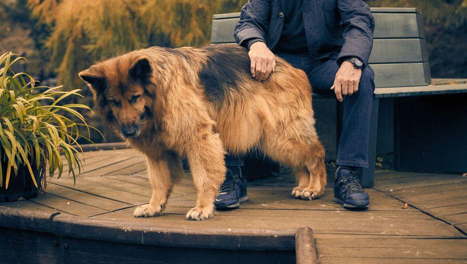 Coach Heynckes mit Schäferhund Cando: ein herrlich altmodischer Mensch