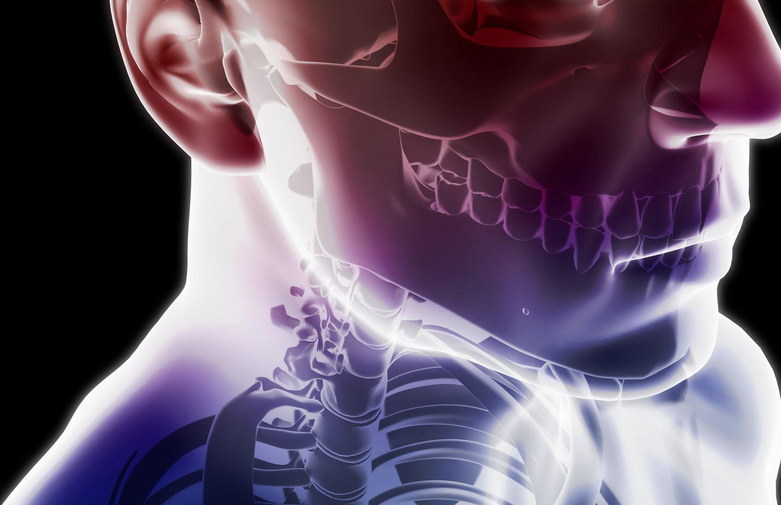 NICHT MEHR VERWENDEN! - SYMBOL / Illustration / Kopf / Hals / Nacken / Skelett / Anatomie /
