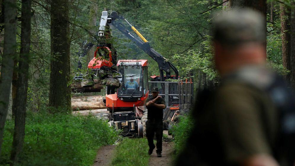 Letzte Urwälder Europas: Es wird weiter geholzt