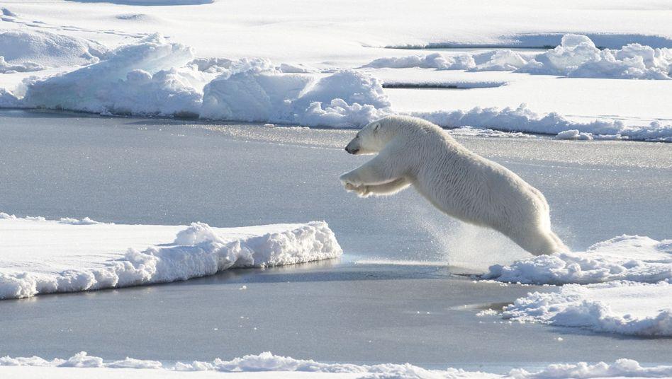 Eisbär in der Arktis (Archivbild)