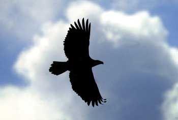 fuß mit krallen bei greifvögeln