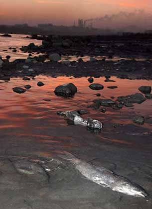 Dead fish lie in a section of the Songhua River in Jilin, northeast China's Jilin province.