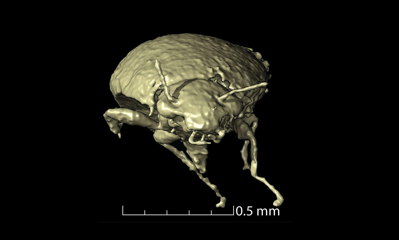 230 Millionen Jahre alte Käfer in Dinokot gefunden