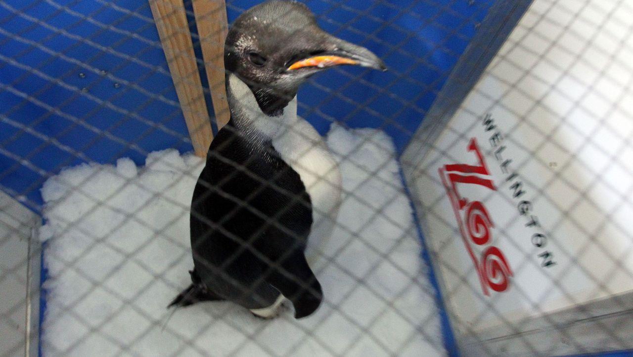 Pinguin Happy Feet