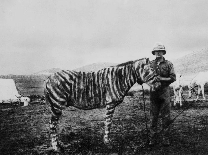 Das ist ein Pony – eins mit Streifen (Aufnahme um 1917 aus Ostafrika)