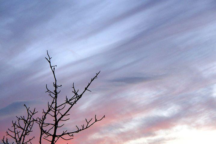 Ohne die Silhouette des Baums wäre der Himmel langweilig