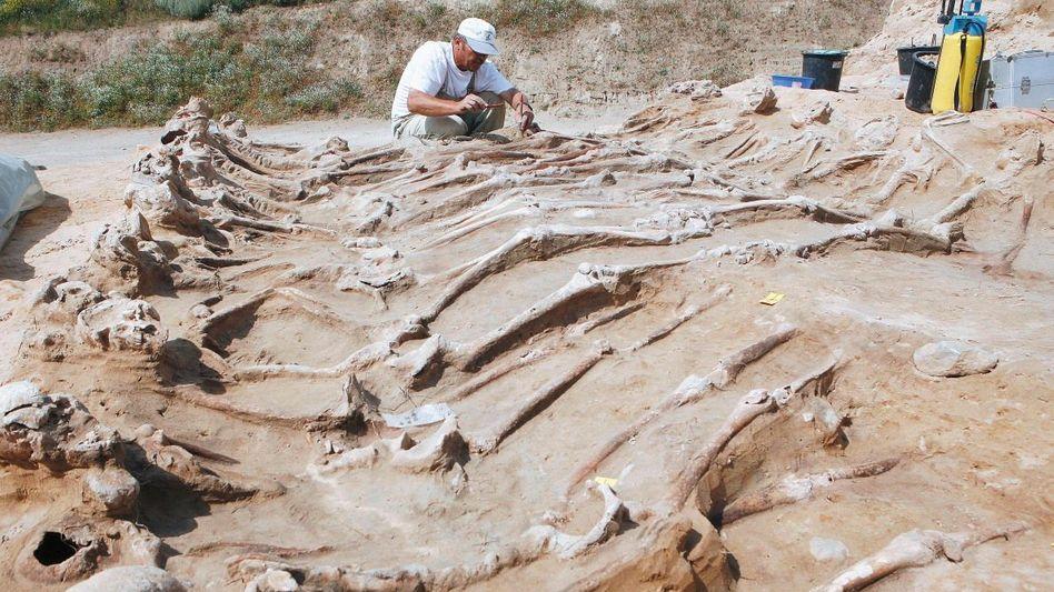 Für Archäologen ist das Massengrab ein Glücksfall.