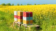 »Wir müssen die Umweltrisiken von Pflanzenschutzmitteln grundsätzlich neu bewerten«
