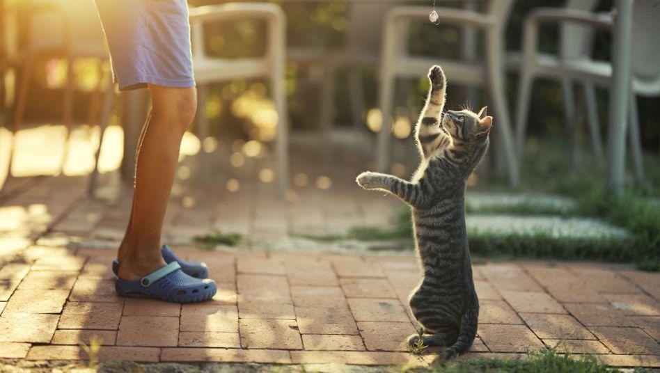 In der Regel sind Katzen harmlos - aber nicht immer